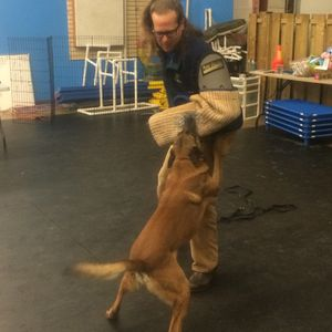What Would Jeff Do? 2/14/2015 How To Dog Training