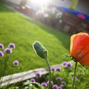 Dārza darbi jūlijā: nebaidieties izgriezt vecos ziedus puķēm un košumkrūmiem