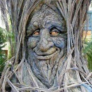 Trees Have Feelings Too