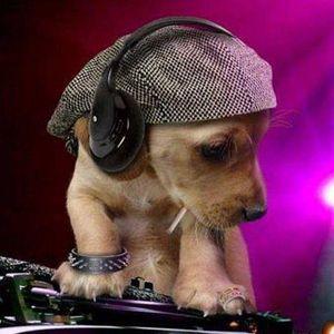 DJ.JOHNNY@PARALIAS