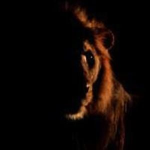 de leeuwenkuil dinsdag 12 november 2013 deel 6