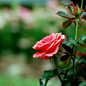 La Vie En Rose -Female Vocal Jazz-