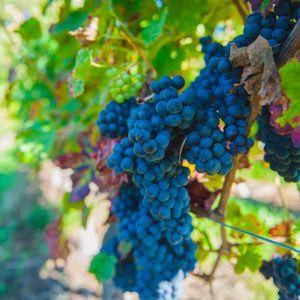 Chateau du Petit Thouars wines by Simon Says