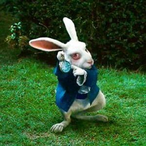 don t follow the white rabbit...