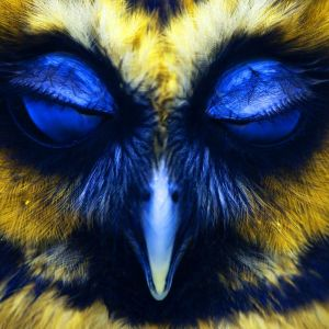 Stefan Hermanns - Blue Yellow Owl Mix