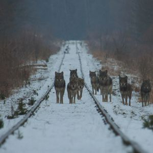 A Wolf at the Door (27.02.2019) - Journey to the Silent Planet