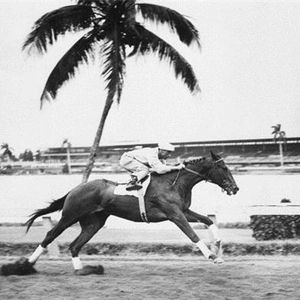 Bold Ruler (1954-1971) - Peter Bounce