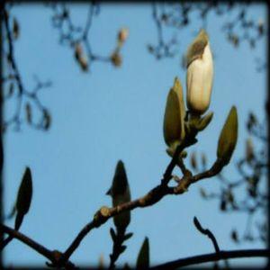l☼skes uit de p☼ls ... Lente