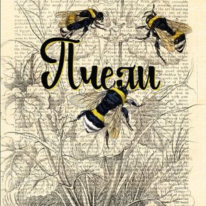 """Аудиозапис од книгата """"Пчели"""" од Мелис Фридентал"""