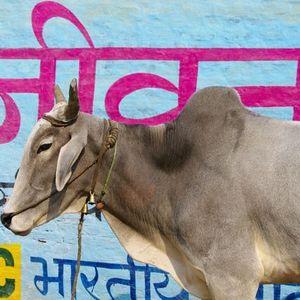 गाय (Digital India - Dan The Automator - Talvin Singh - Onra - Bill Laswell - Dj Stavros )