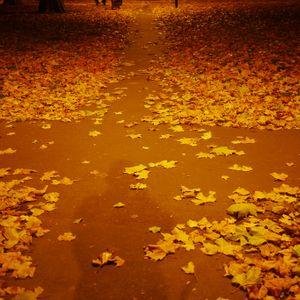 Autumnal Ephemera