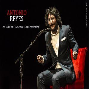 Antonio Reyes en la Peña Flamenca 'Los Cernícalos' (2016)