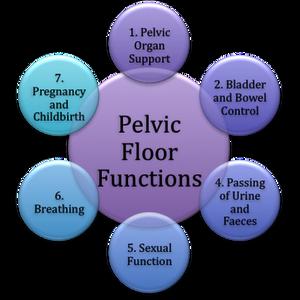 Women's Pelvic Health on AFO LIVE