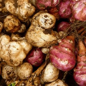 Olbaltumvielām un ogļhidrātiem bagātais augs - topinambūrs