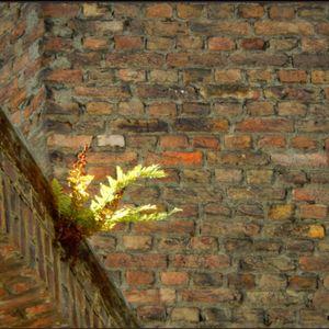 l☼skes deur de muure