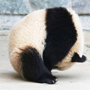 PANDA DEEP