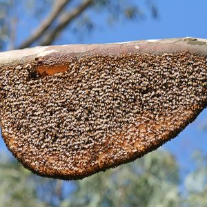 Dan Dizette – XNMX 062: Hug the Hive and Down the Fourth Path
