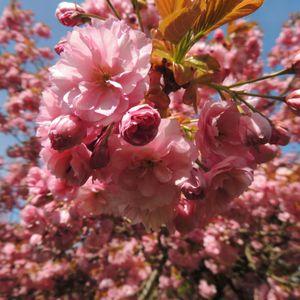 SpringtimeMix 1.15