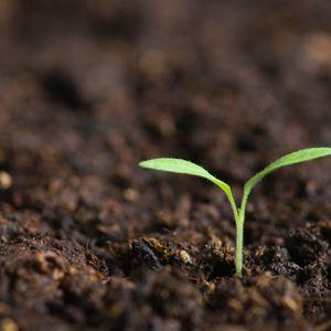 Episode 3. Soil Science with Kirsten Kurtz and Bob Shindelbeck