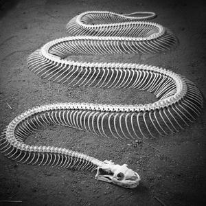 Snakes #09 - 25/11/11 - on RadioBasePopolare