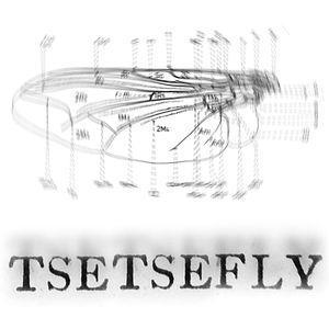 Tse Tse Fly - January 30th 2015