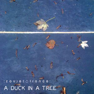 A Duck in a Tree 2013-11-09 | A Playful Wind Stops at Will