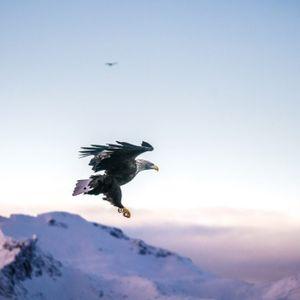 Solo Ride 130 - Energy Mountain