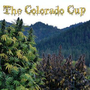 MUSIC BUZZ LIVE 040616 #POTTALK THE COLORADO CUP