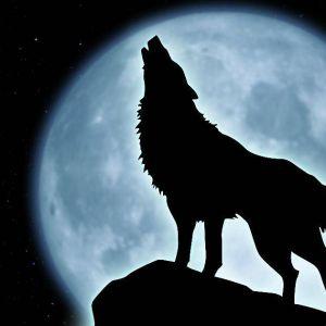 La Nuit du Loup#14 Street Wal avec le Loup de la semaine : ZEPEK TAUREAUX