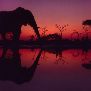 Earthquake Elephant