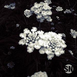 Flores Para Los Muertos