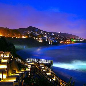Night Paradise