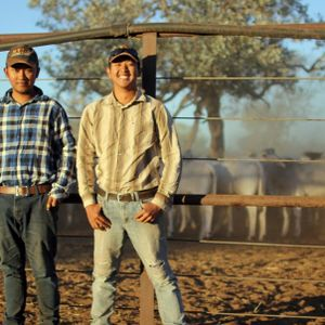 Searching for a babbler, and life on a cattle station