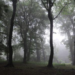 Alexy.Nov - Zeleznovodsk's Forest