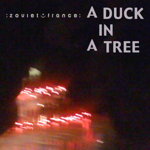 A Duck in a Tree 2012-10-27 | The Green Shaded Light