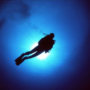 Tales Of An Experienced Diver