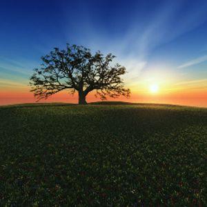 Let the Sun Rise...
