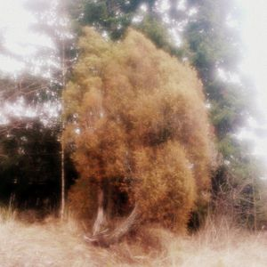 Rainy Day Mystical Themes