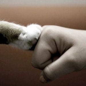 Pet The Cat Mix