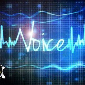 Voice 15 Jan 2017