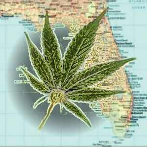 The Future of Medical Marijuana and Industrial Hemp in Florida