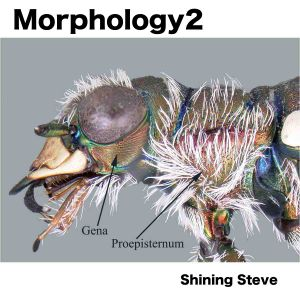 morphology2