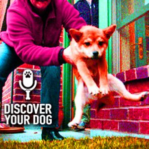 Ep 063 Here's the Scoop on Potty Training Your Dog