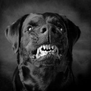 Unleash the dog