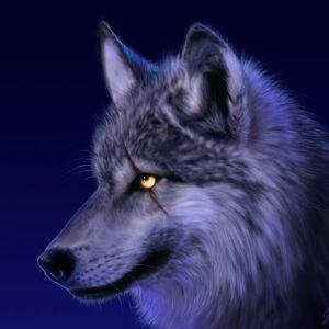 La Nuit du Loup édition # 12 avec Street Wal feat: Noly Bes , Mr PIMP , Oualid Salem et Pat Fuineur