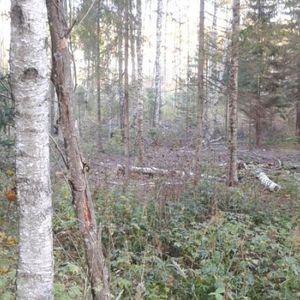 Dabai draudzīga saimniekošana mežā