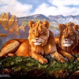 de leeuwenkuil maandag 23 november 2015 met dank edwin simonis