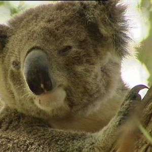 US Presidents: The Weird and the Wonderful & the future of Koalas in Australia