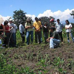 Agricultura orgánica, huertos, Ojo de Agua, Ecuador