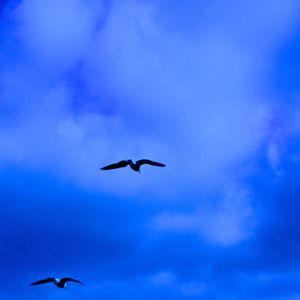 Blue bird session